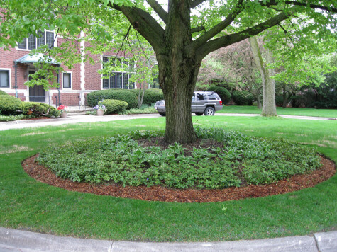 You are on the ideas page home construction management - Landscaping around a tree ...